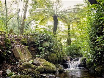 Mealhada: Semana da Floresta e da Água
