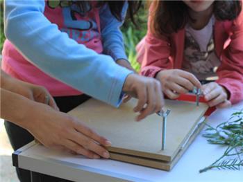 Domingos no Buçaco | Construindo um herbário