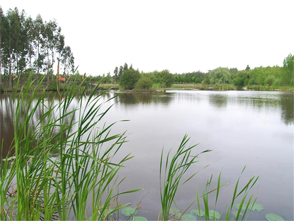 Laguna de los Coadiçais o de los Cedros