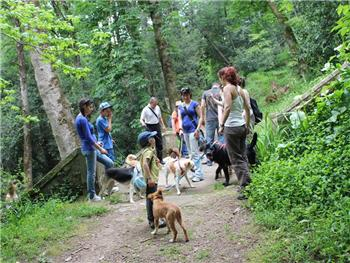 II Dog Trekking no Buçaco