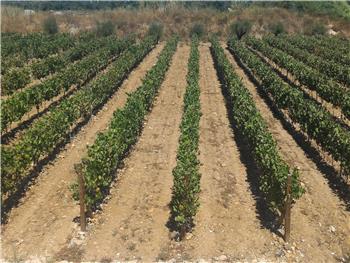 Visita Guiada ao Prior Lucas com prova de Vinhos | Espumantes | Azeites