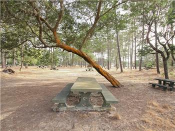 Parque da Vagueira