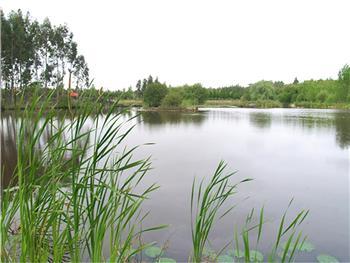 Lagoa dos Coadiçais ou dos Cedros